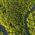 Tbs Amazonian Forest Hackathon Hl 150x150